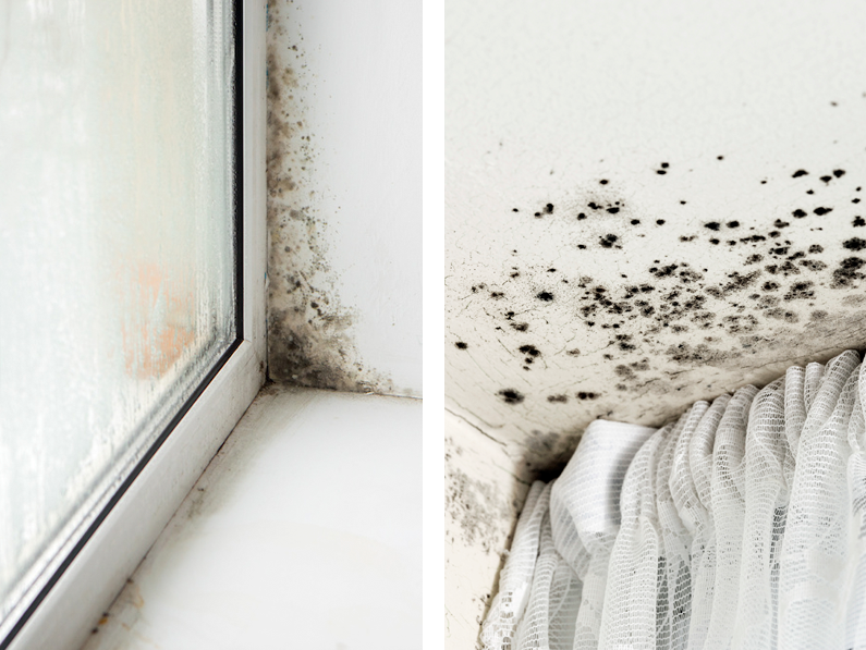 Aparición de moho, deterioro de paredes y muebles, Mala calidad del aire, malos olores, vapor y goteo en cristales y marcos de ventanas, son las consecuencias de las condensaciones en viviendas particulares Cantitec Granada España