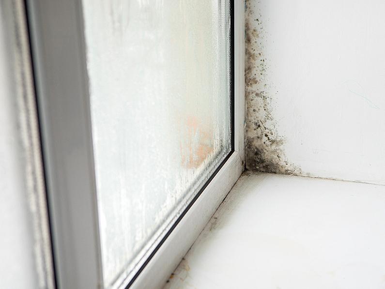 C mo eliminar el moho causado por la humedad por condensaci n cantitec - Como eliminar la humedad de la pared ...