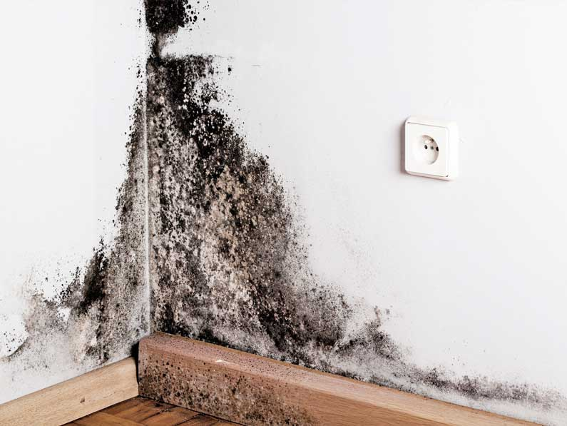 C mo podemos prevenir el moho en las paredes de tu casa - Moho en paredes ...